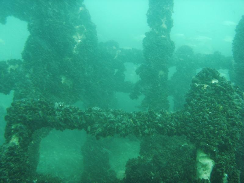 Carl Gerhard and Kyzicke shipwreck stern - photo by Marc Corbett