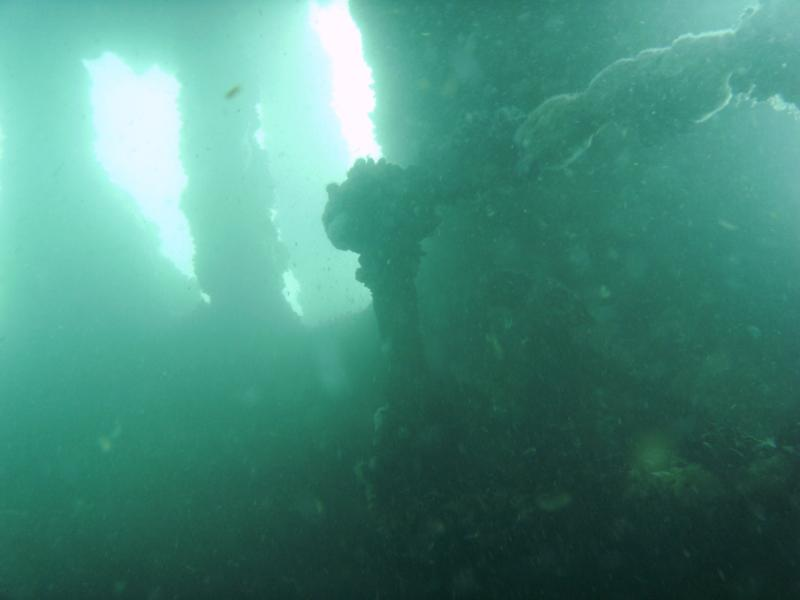 Carl Gerhard shipwreck - Photo by Marc Corbett