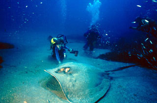 Ann gets in touch with a Large Ray (DiveHatteras Photo)