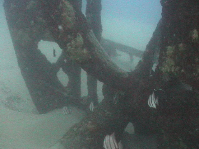 The S.S. Hesperides propeller is sometimes very exposed.  DiveHatteras photo